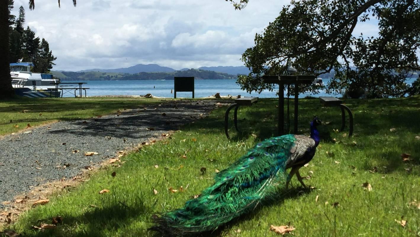 Kawau The Island That Lost Its Stripes But Not Its Charm Stuff Co Nz