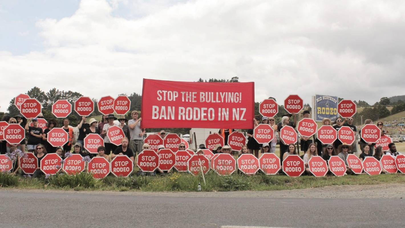 Protesters Assaulted Like The Animals At Rodeo Animal