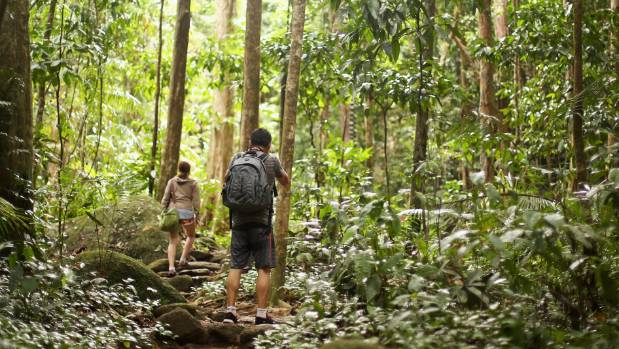 Daintree rainforest - one of the oldest  tropical rainforests in the world.