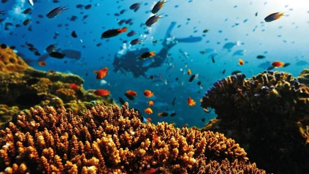 The underwater wonder that is the Great Barrier Reef.