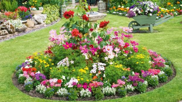 Garden Bedding Plants - Garden Design Ideas