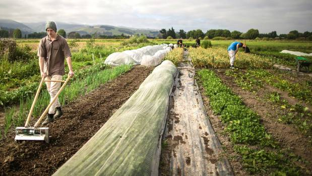 Growing up the christchurch urban farms helping at risk for Grow landscapes christchurch