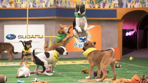 Stars of the 2018 Puppy Bowl.