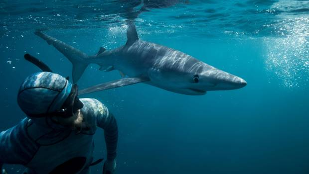 Surfer 'punched shark until it let go'