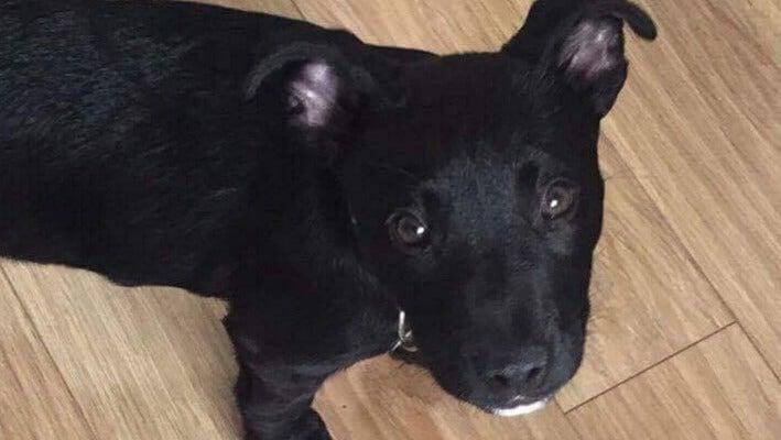 Jack Van Biljon's beloved pup Turbo died in 2018.