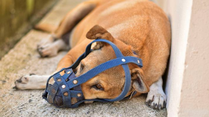 Animal welfare group says too many dogs are being euthanised