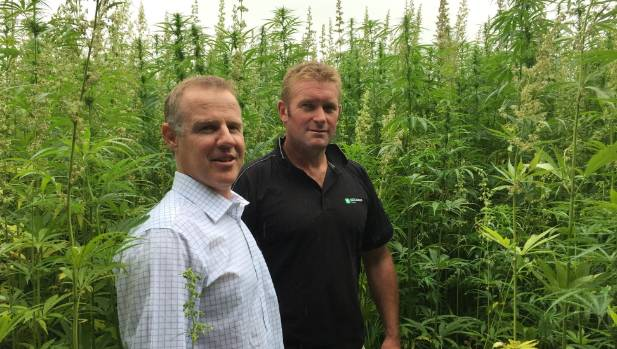 Midlands Seeds director Andrew Davidson, left, and field agronomist Brent Middleton: hemp varieties are bred for seed ...