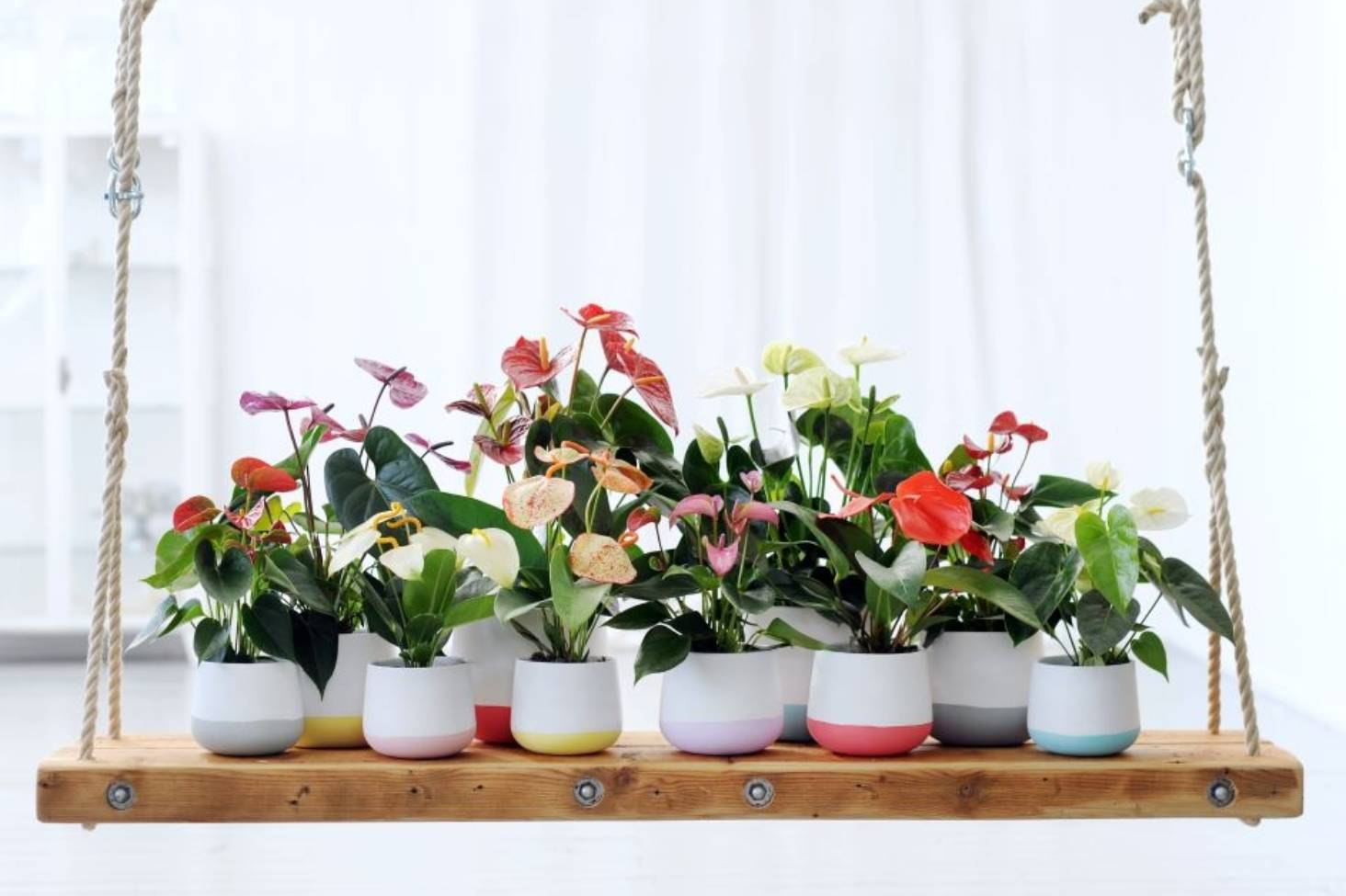 6 houseplants to clean your air, lift your mood and improve