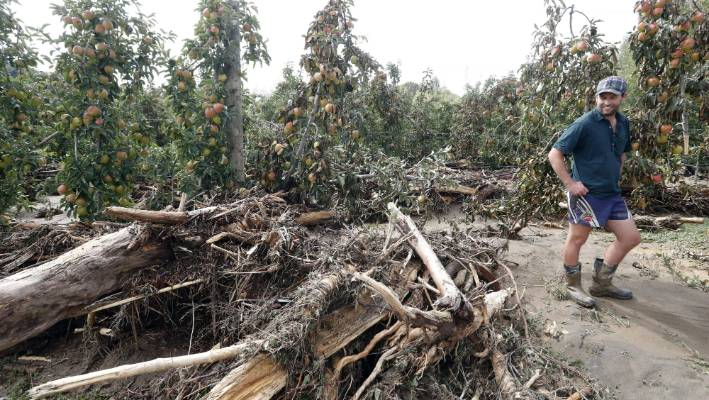 Gita Fallout Catastrophic For Some Orchardists Says