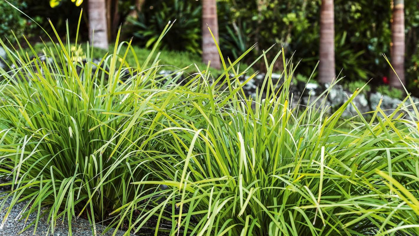 10 Garden Plants Even You Can T Kill Stuff Co Nz