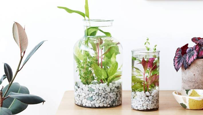 How To Make Your Own Aquatic Terrarium Stuff Co Nz