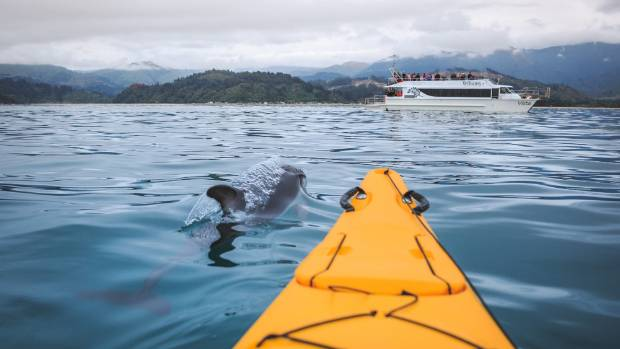 A day with the dolphins in Abel Tasman National Park