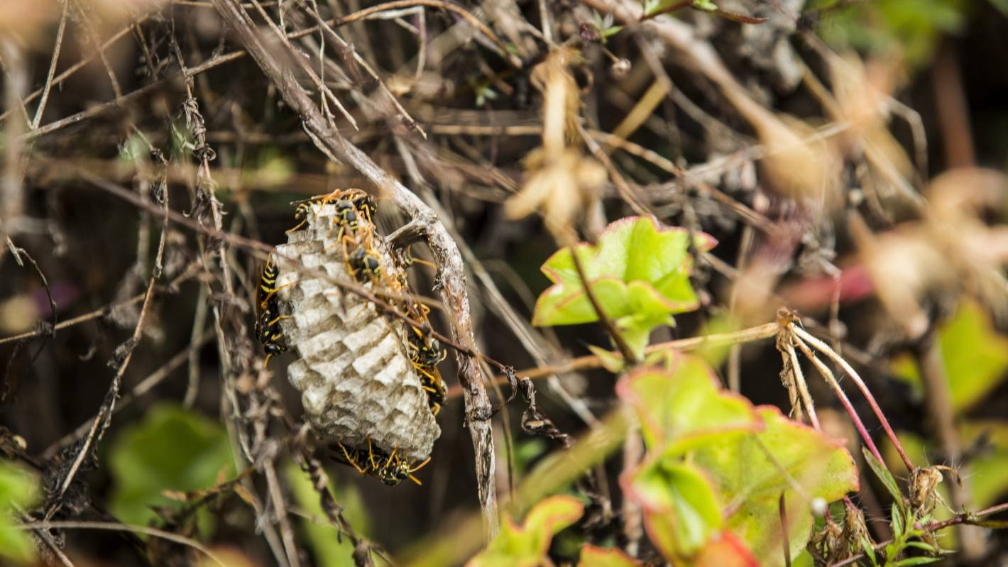 Teenage Mutant Ninja Turtles (2014 film) - Wikipedia Paper wasps nests pictures