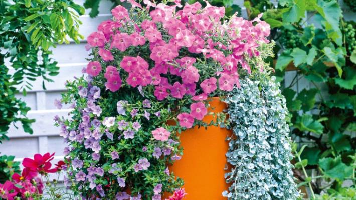 3 Rules Of Creating Sensational Flower Combinations In Pots