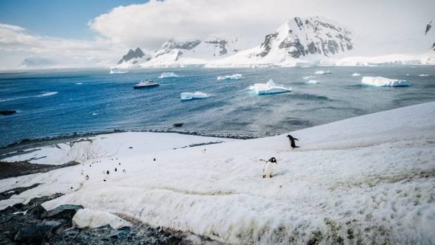 Spoiler alert - the vast amounts of penguin poo everywhere in Antarctica is unavoidable.