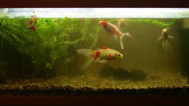 22 household uses for an old toothbrush for Cleaning fish tank with vinegar