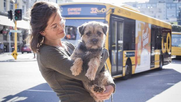 Pets to be allowed on Wellington public transport