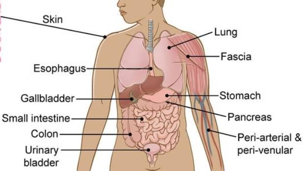 Major breakthrough: Scientists discover new human organ