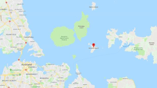 DOC investigates stoat sighting on Hauraki Gulf island Stuffconz