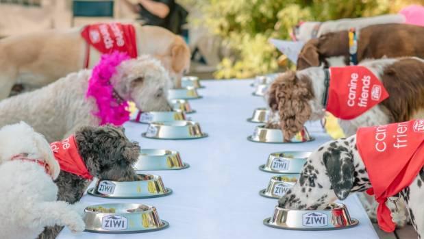 Raw Dog Food Christchurch