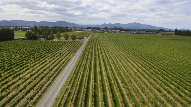 """A 24ha vineyard on Alabama Rd was the ministry's """"preferred option"""" in December 2016."""