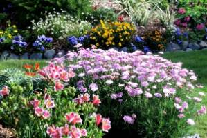 The wide variety of plants throughout the garden have attracted many different birds.