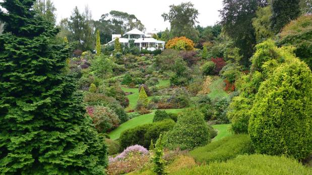Muriel and Bob Davison's 16-hectare Maple Glen garden at Glenham, looking back to the family home.