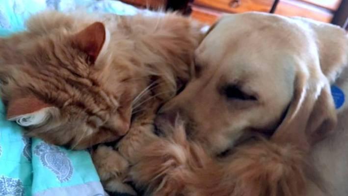 Furry Friday: Humanity's gentlest friend | Stuff co nz