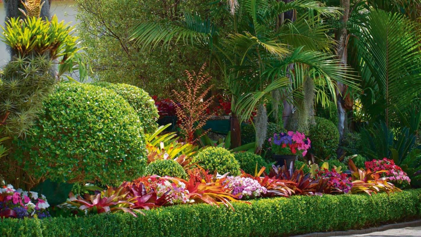 Garden of the week: A dazzling bromeliad-rich oasis ...