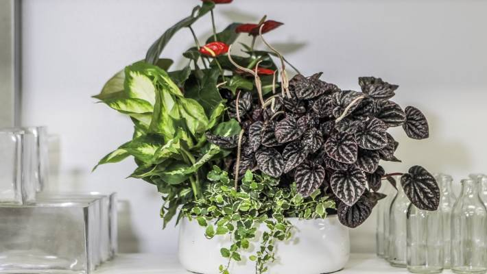 Planter Bowls Are The New Terrariums Stuff Co Nz