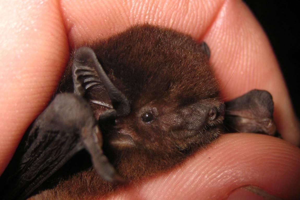 Bats Are Marvellous Mammals Not