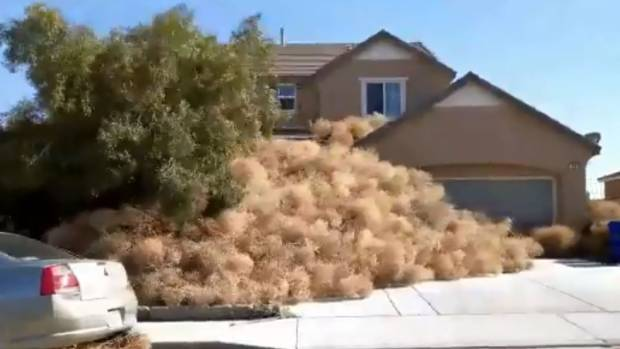 US town overrun with tumbleweed after high winds