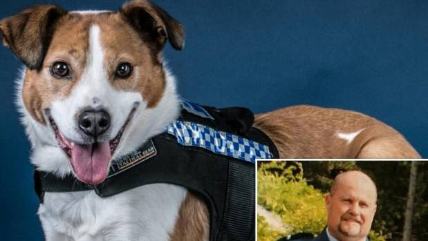 """NZ Police dog Tasman """"Tas"""" is the only cross-breed animal in service with (inset) her police officer Matthew Fage."""