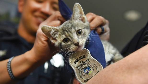 Pawfficer Badges, the Troy Police mascot, falls ill
