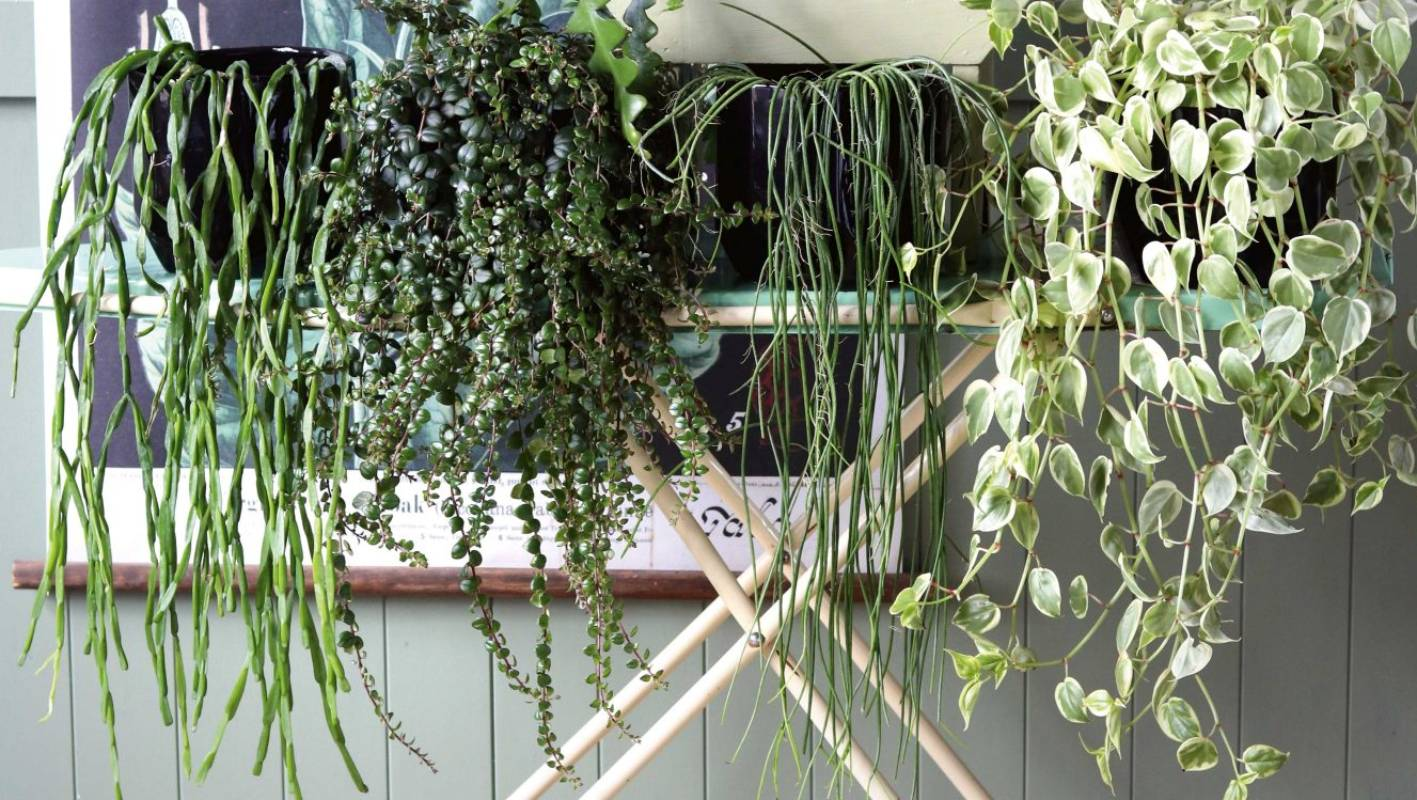 Artificial Hanging Plants Outdoor