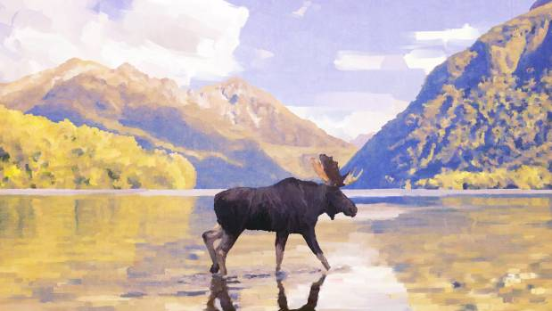 There are signs moose still live in NZ's wilderness