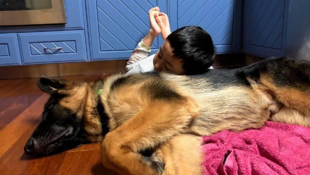 Carson, 6, snuggles with Abra.