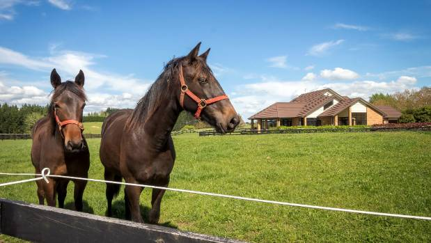 The Cambridge area is one of the country's premier horse breeding regions.
