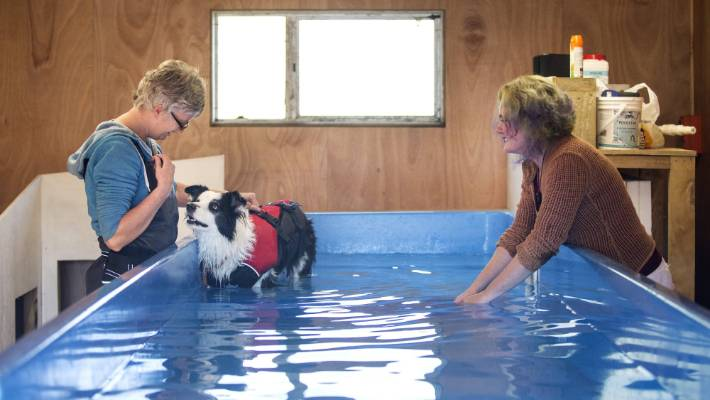 Therapy Swimming Pool Just For Dogs Stuff Co Nz