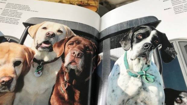 Brown labrador Phoebe, centre, featured in the 2015 edition of Wine Dogs New Zealand.