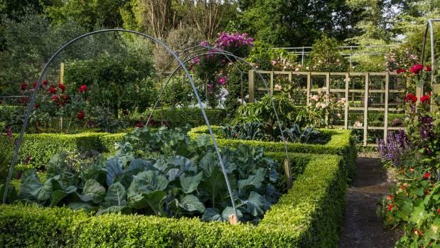 Vegan gardening. Yes, it\'s a thing | Stuff.co.nz