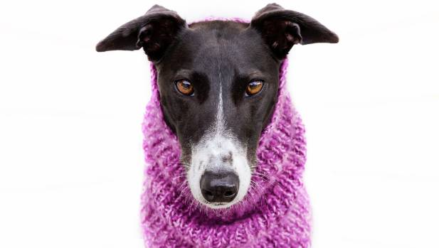 Maggie's handknitted snood, by Marie Southwood, will take her from lounging on the couch at home to a stylish romp in ...