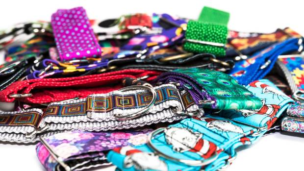 Colourful collars are a must-have accessory for the modern greyhound.