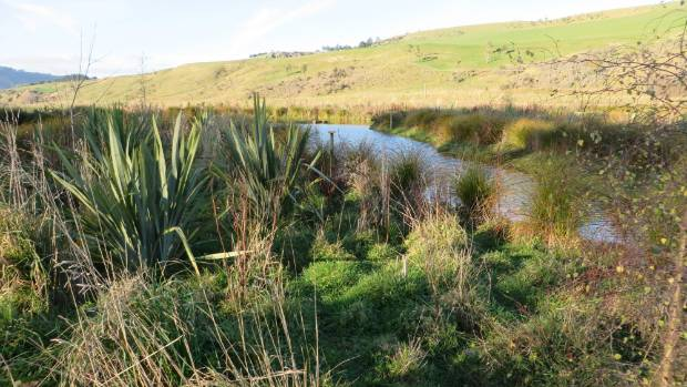 A low lying wet area was dammed into a pond, with riparian planting of natives.