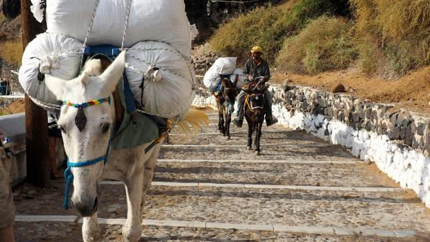 The donkeys and mules carry more than just people between the port and the town.