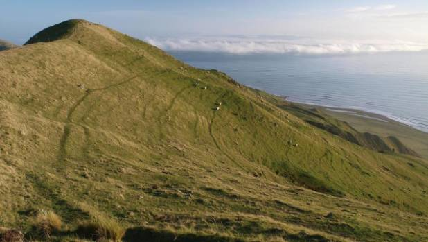 chinese owner fights access to nz farm  says would harm nz