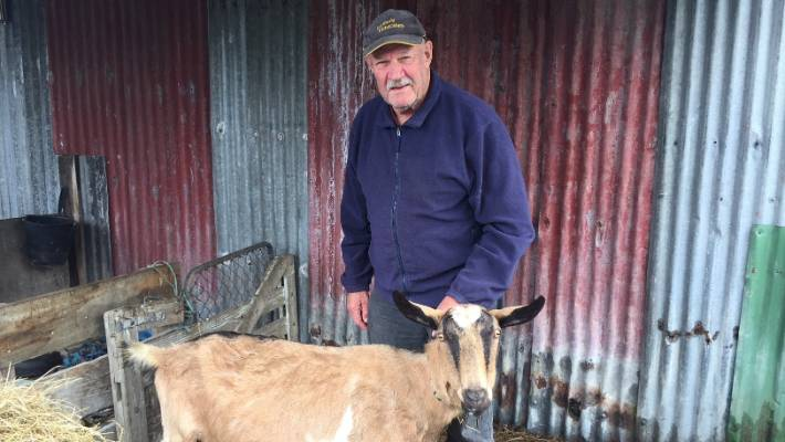 North Canterbury dairy goat farmer takes out top industry