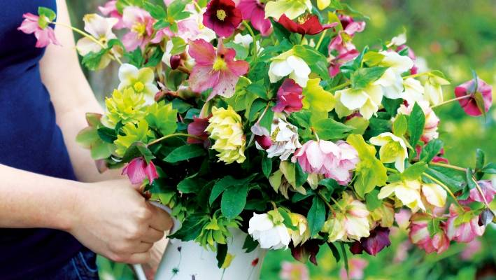 Hellebores Whilst Being Incredibly Beautiful Are Tough Too They Can Survive Long