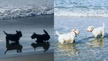 Furry Friday: Beach days are the best days | Stuff co nz