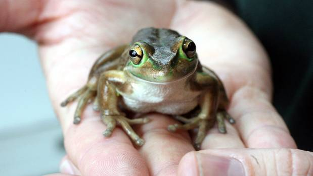The frog (not pictured) is doing well, and putting on weight.